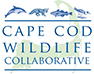 Cape Cod Wildlife Collab