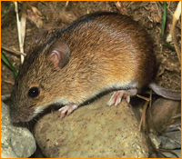 Baiting For Rats Is Also Used In Outdoor Environments To Control Rat Activity